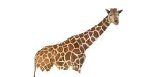 Giraffe Software