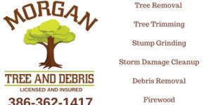 Morgan Tree and Debris