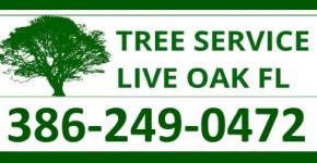 Tree Service Live Oak Fl