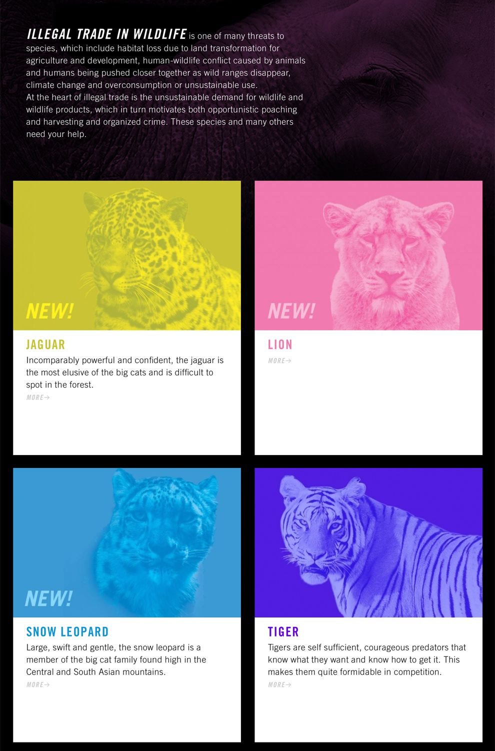 Wild for Life Engaging Website Design