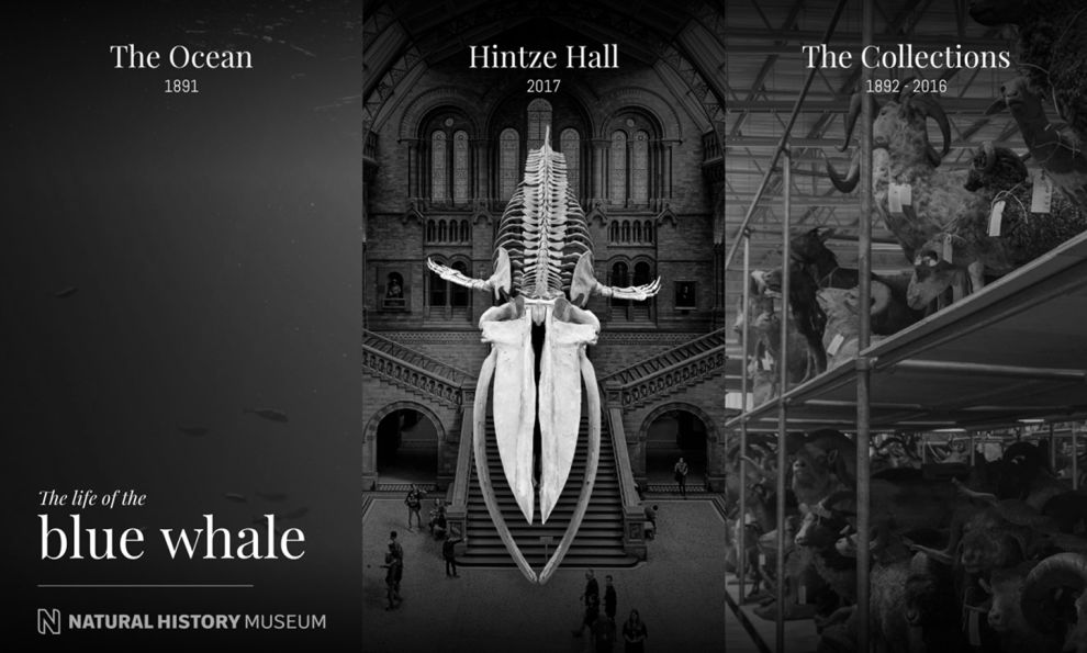 Natural History Museum Great Homepage