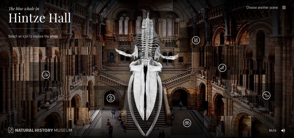 Natural History Museum Top Website Design
