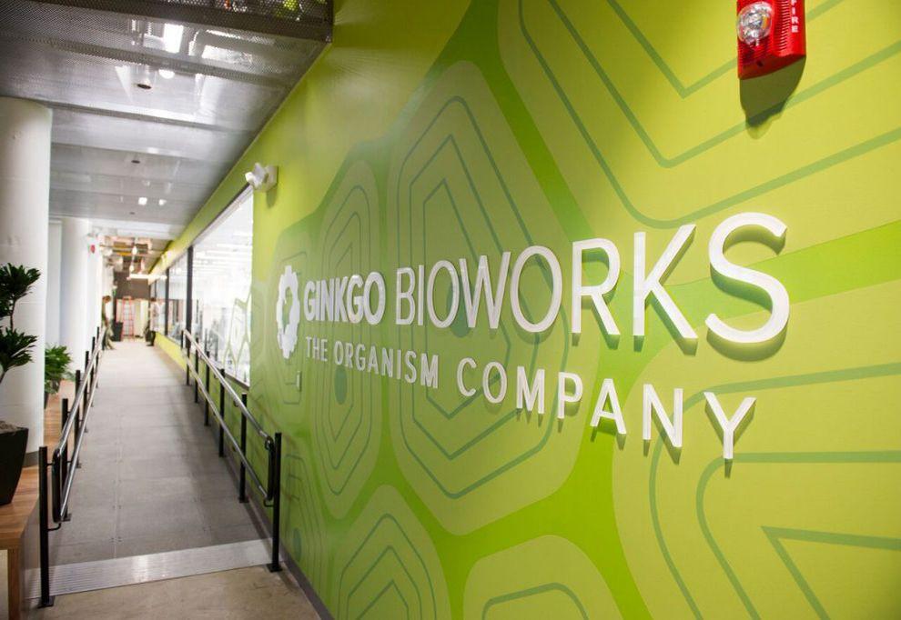 Ginkgo Bioworks Engaging Logo Design