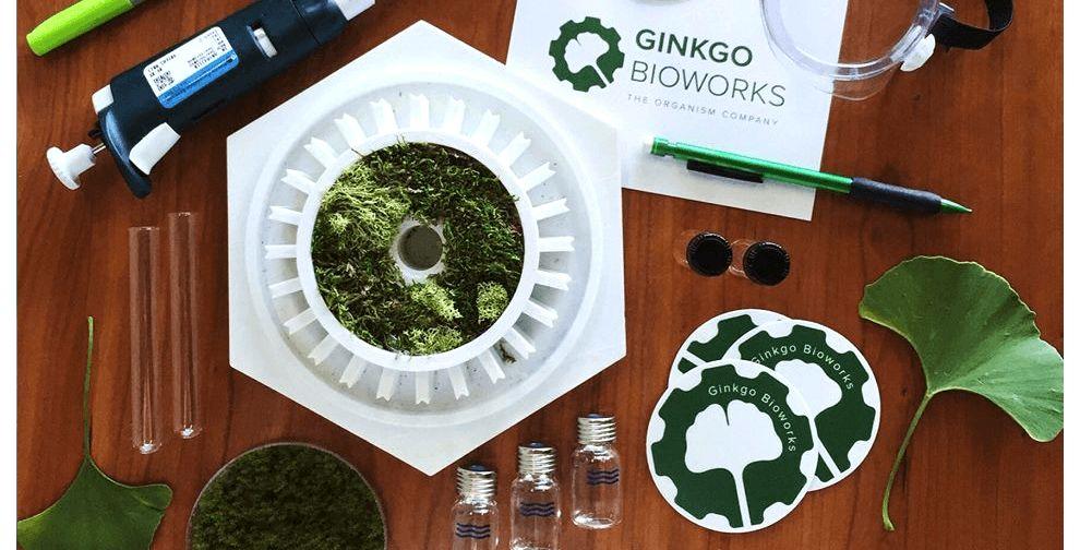 Ginkgo Bioworks Logo Design