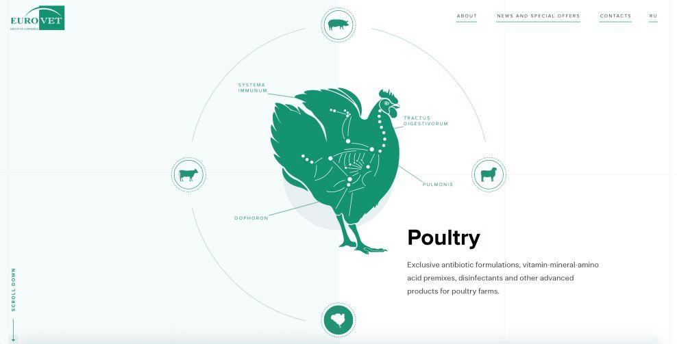 Eurovet Home Page Chicken Website Design
