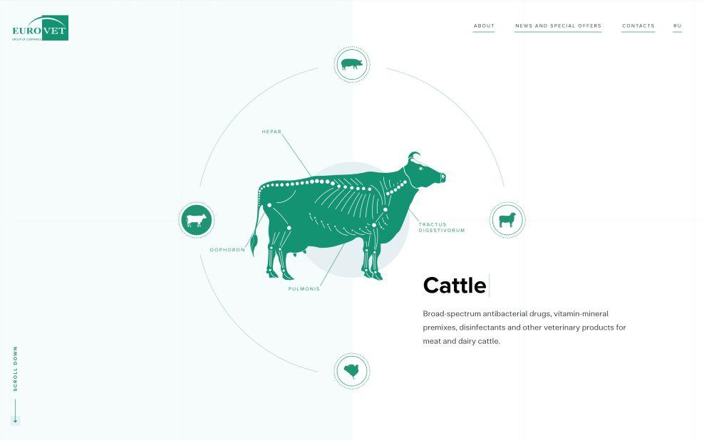 Eurovet Home Page Cow Website Design