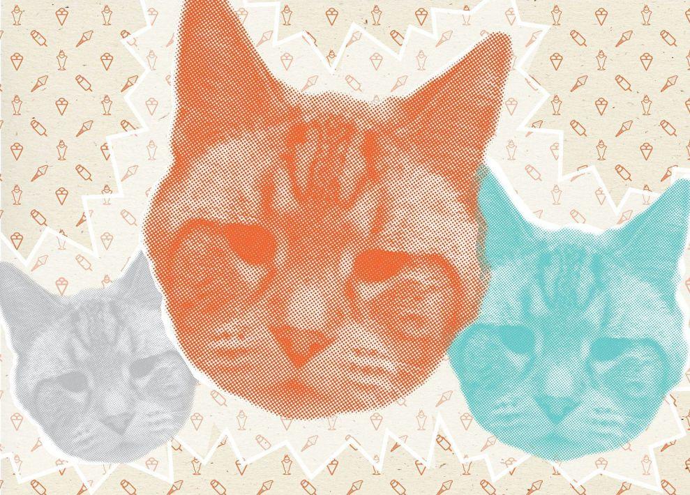 Fat Cat Creamery Bold Print Design