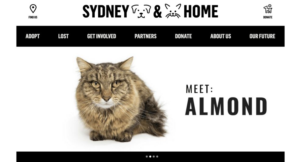 Sydney Dogs And Cats Website Logo Design