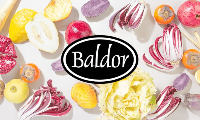 Baldor's Colorful Website Design Stuns With A Visually-Driven, Product-Centric Layout