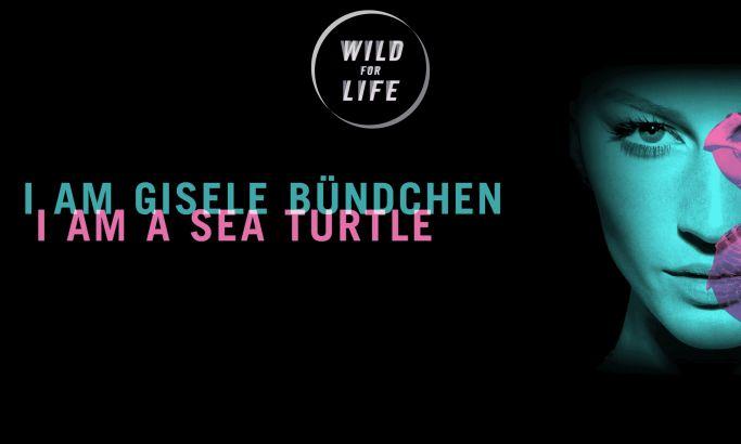 Wild for Life Colorful Website Design
