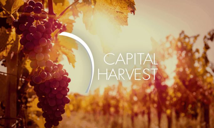 Capital Harvest Beautiful Website Design