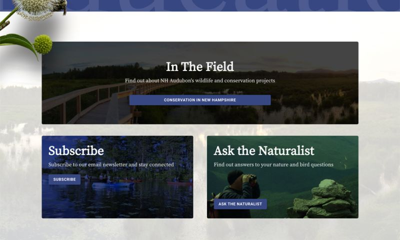 CleverLight Media - NH Audubon