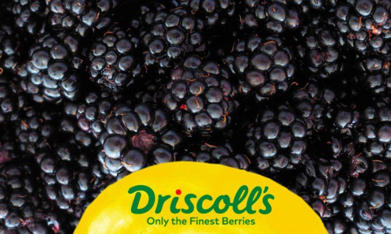 Essencius - Driscoll's Sweet Tribute - Brand Activation