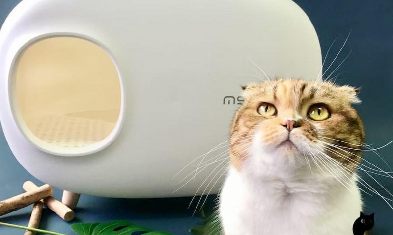 Seotonic Web Solutions Pvt Ltd - CatSmart