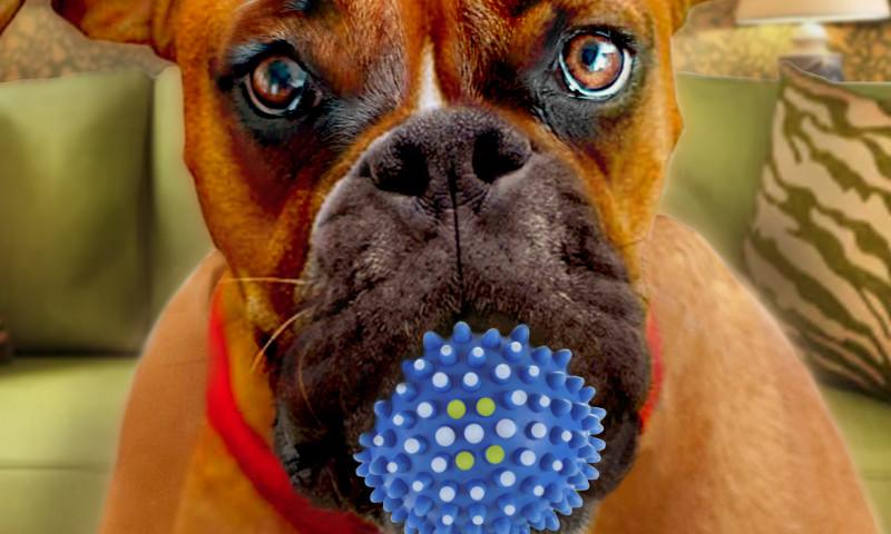 Celtic Chicago Inc. - Pet Industry