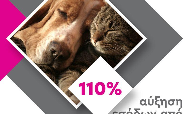 Digital4u - PetShop88 Google Ads Strategy