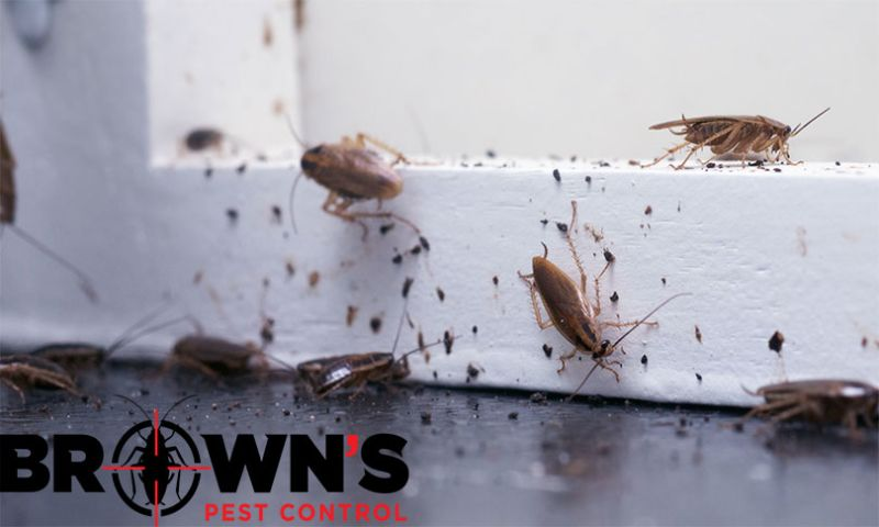 Kmarks Web & Computer Solutions - Brown Pest Control