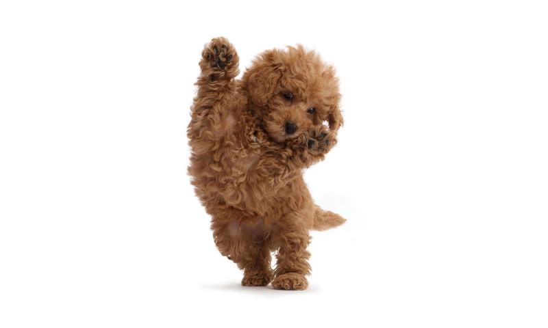 Klicker - Uptown Puppies