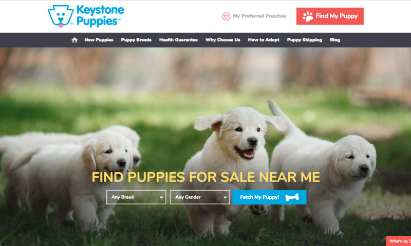 WebTek - Keystone Puppies Website