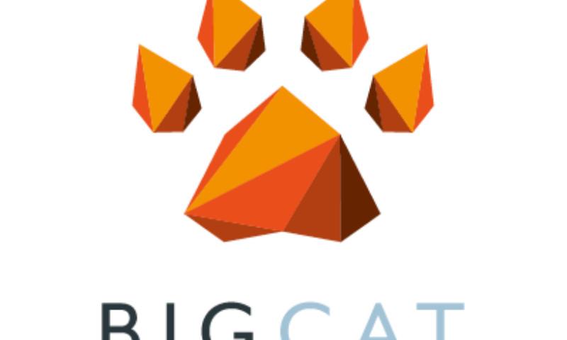 Big Cat Agency - Big Cat Agency