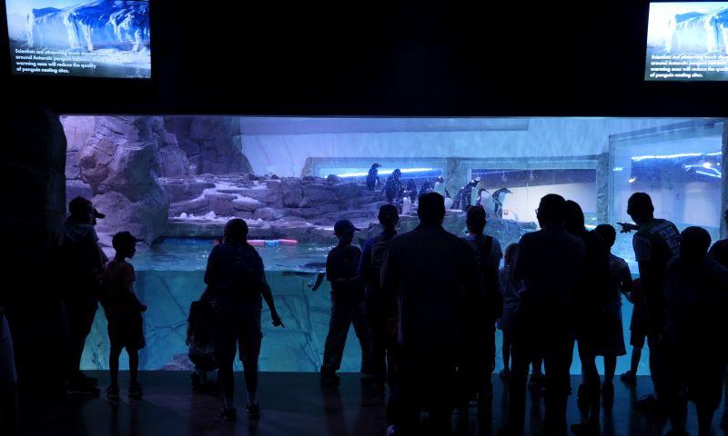 Ideum - Interactive Penguin Exhibits