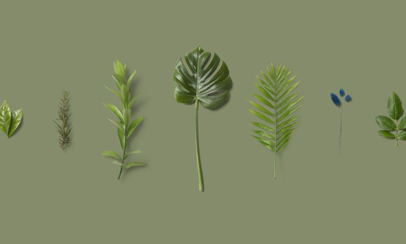 Evrone - Plantscounter