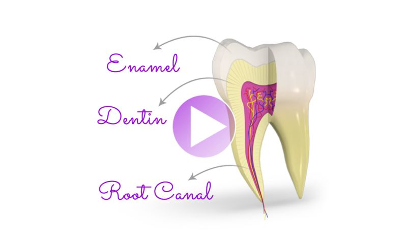Siva Solutions Inc. - 3D Dental Patient Education Videos