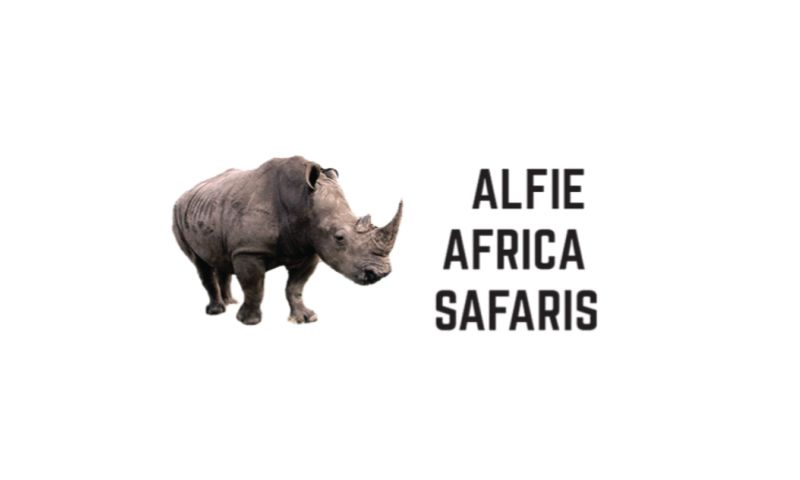 Webpinn - Alfie africa safaris