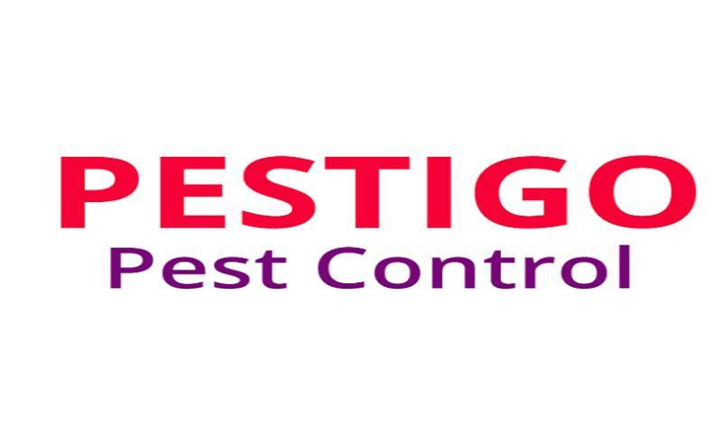 SEO Deisres - Pestigo Pest Control